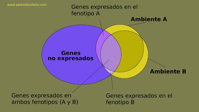 Fenotipos y factores de las enfermedades de la civilización