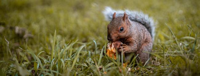 Alimentación evolutiva