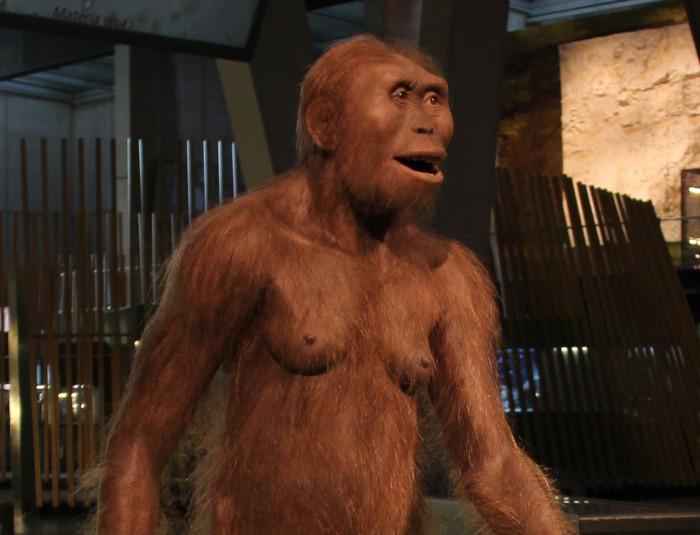 Australopithecus, dieta