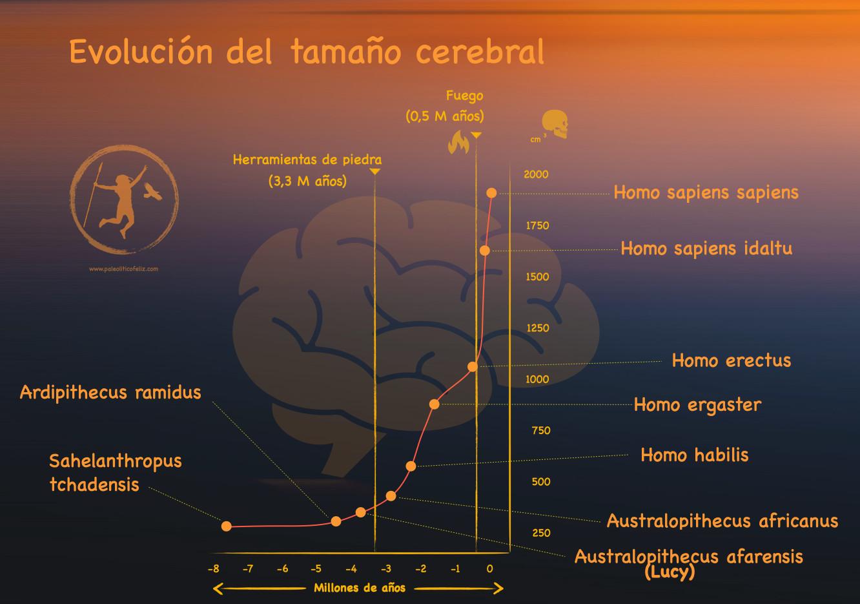 Aumento del volumen cerebral desde el Australopithecus