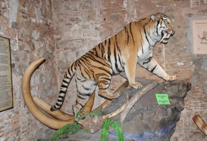 Carnívoros del plioceno, dieta carnívora