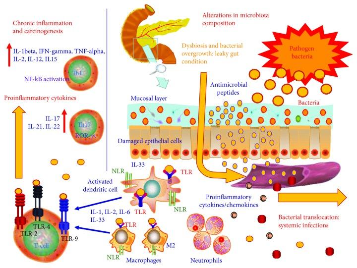 Microbiota, permeabilidad intestinal