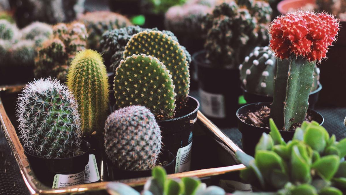 El veneno de las plantas. Las defensas evolutivas.