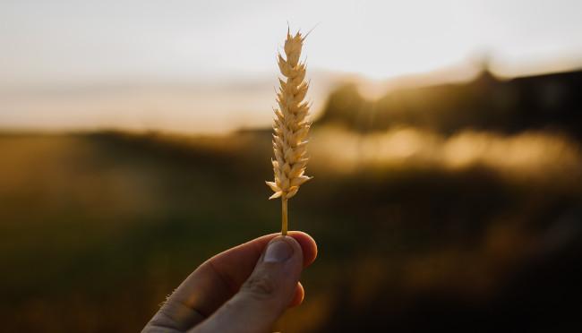 Alimentación en el neolítico