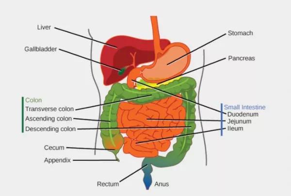 permeabilidad intestinal